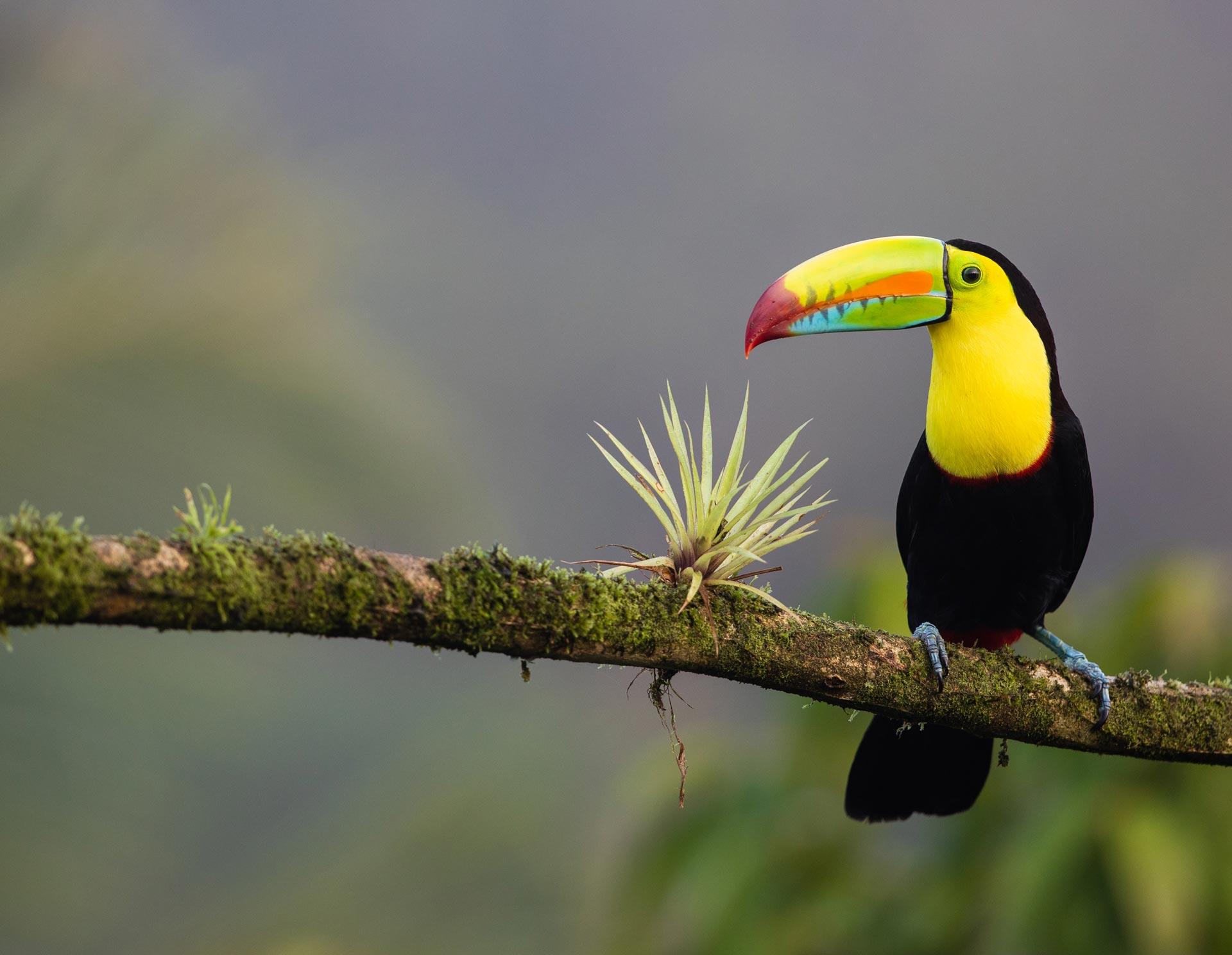 Costa-Rica-y-Panama-06